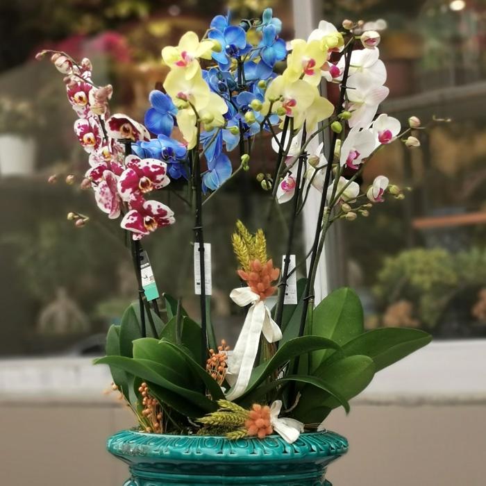 Rengarenk Orkideler