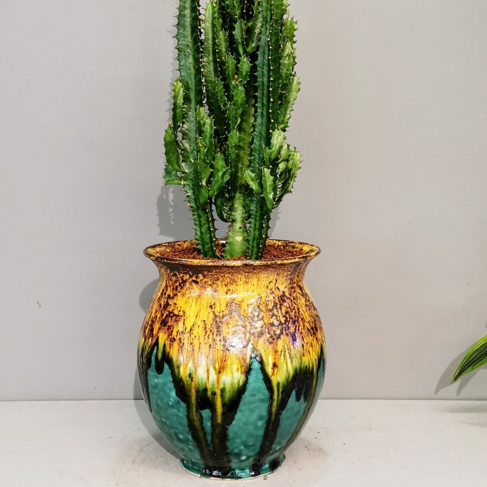 Raku Serisi Euphorbia