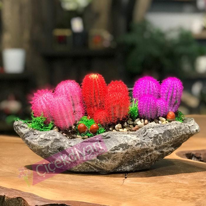 Renkli Kaktüsler