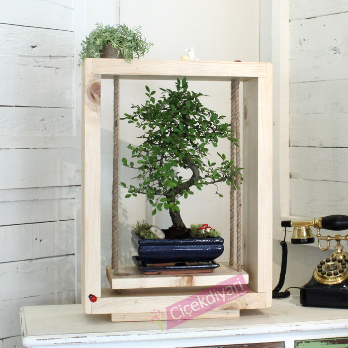 Salýncakta Bonsai