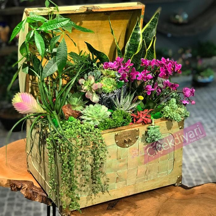 Sandýk Dolusu Çiçek