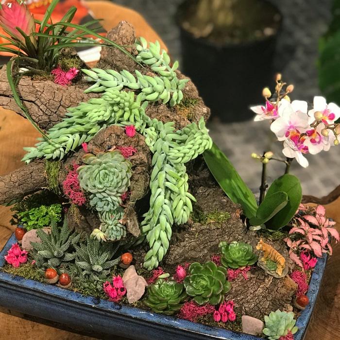 Sedum Bahçe