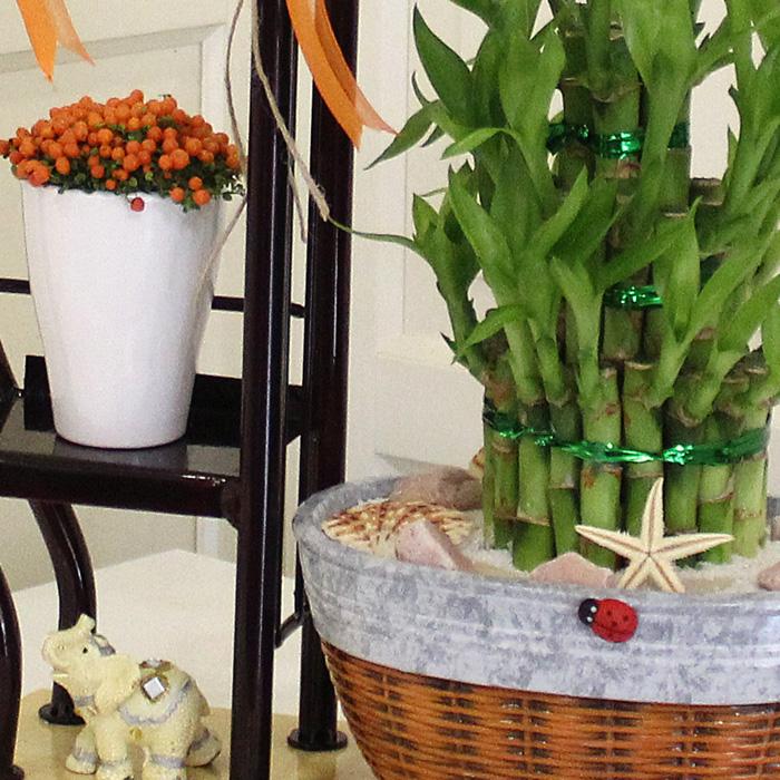 Sehpada Bambu ve Nertera