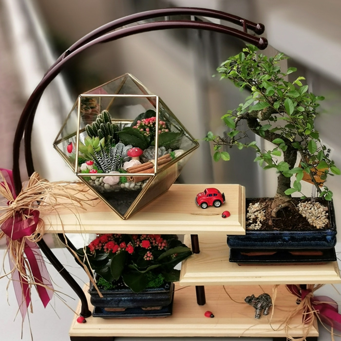 Bonsai ve Terrarium