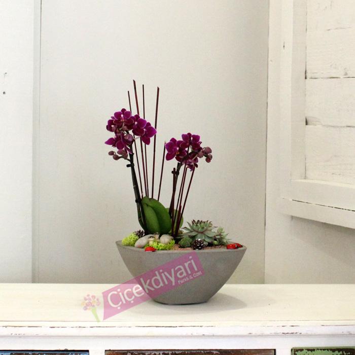 Taşta Açan Orkide