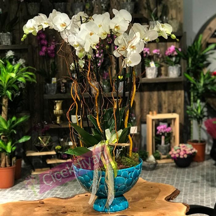 6 dallý Beyaz Orkide