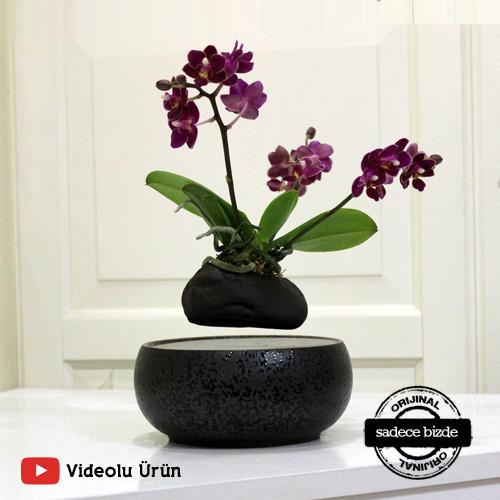 Uçan Orkide