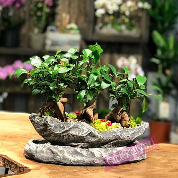 Ürgüp bonsai tasarým