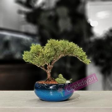 Turkuvaz Serisi Juniperus Bonsai
