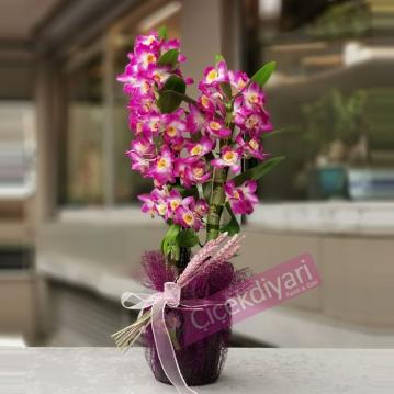 Dendrobium (Bambu) Orkide