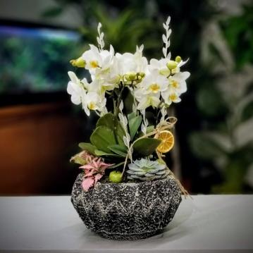 Anadolu Hisarý orkide