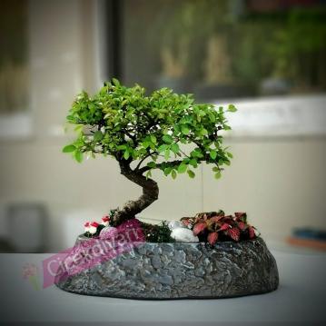 Dekoratif Saksýda Bonsai