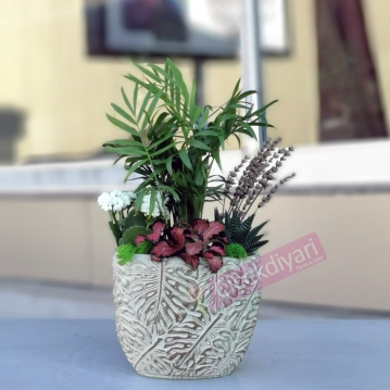 Cihangir Bitki Aranjman