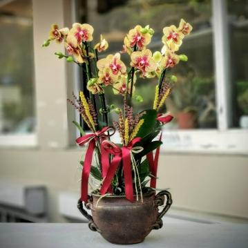 Charmer Orkideler