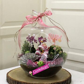 bebek için terraryum, bebek çiçekleri