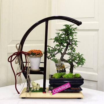Sehpada Bonsai