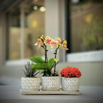 Florya - Mini Orkide Nertera
