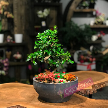 Bonsai Ve Nertera