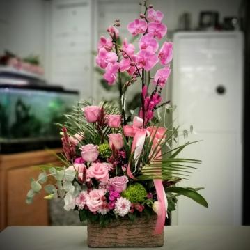 Haliç Serisi Pembe Orkide
