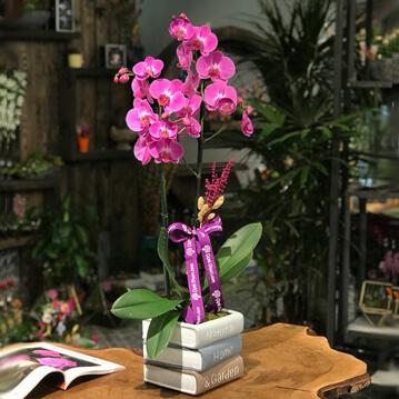 Kitapta Fuþya Orkide