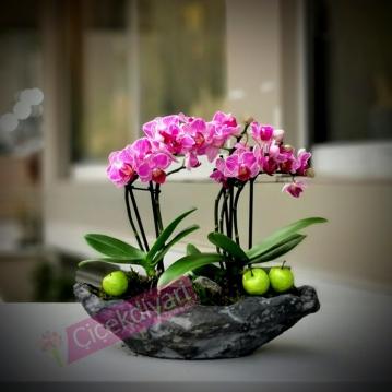 Dikilitaş Mini Orkideler