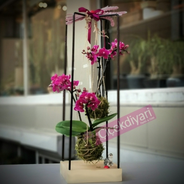 Kokedama Mini Orkideler