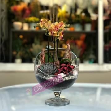 Mini Charmer Orkide