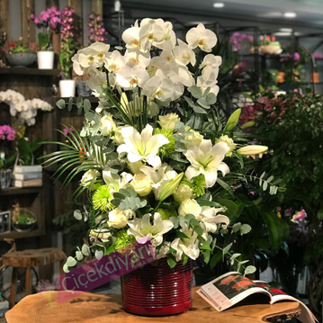 Orkideler Butik çiçek