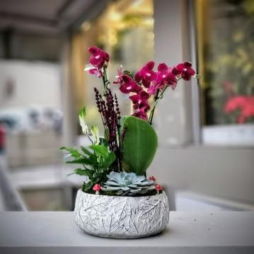 Özel Koleksiyon Sogo Relex Orkide