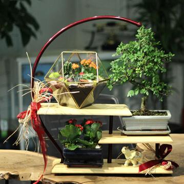 Bonsai ve Terrarium