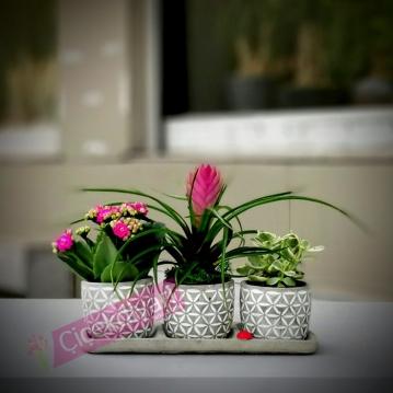 Vaniköy bitki aranjmanı