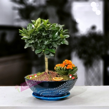 Oriana - Minyatür Mandalina