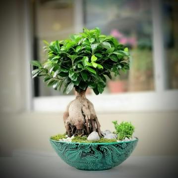 Galvanizde Ginseng Bonsai