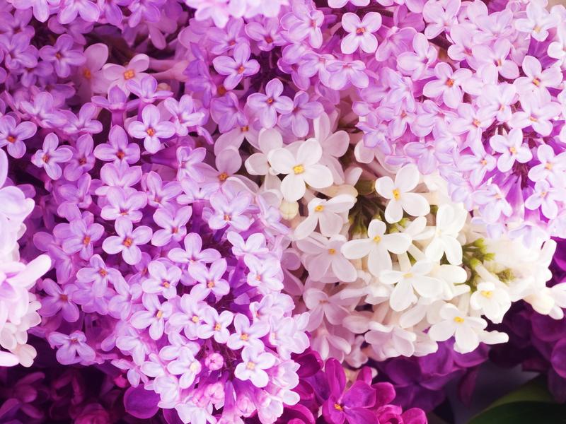 Çiçek Bakımı - Bitki Bakımı - Saksı Çiçeği Bakımı Nasıl Yapılır?